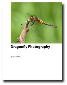 how to photograph dragonflies free ebook
