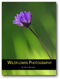 Wildflower Photography (eBook)