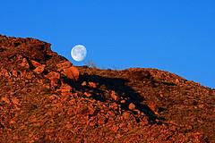 Moonset at Sunrise / Photo by Steve Berardi