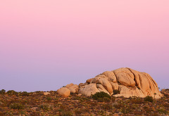 Mojave Desert at Sunset / Photo by Steve Berardi