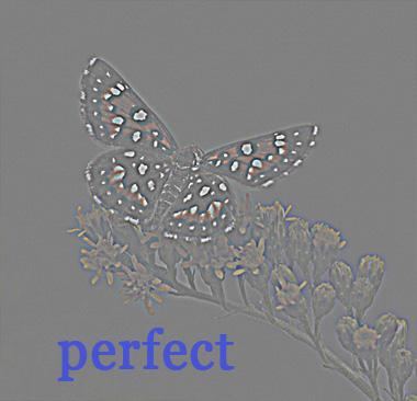 img_5322-hp-perfect