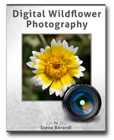 Digital Wildflower Photography (cover)