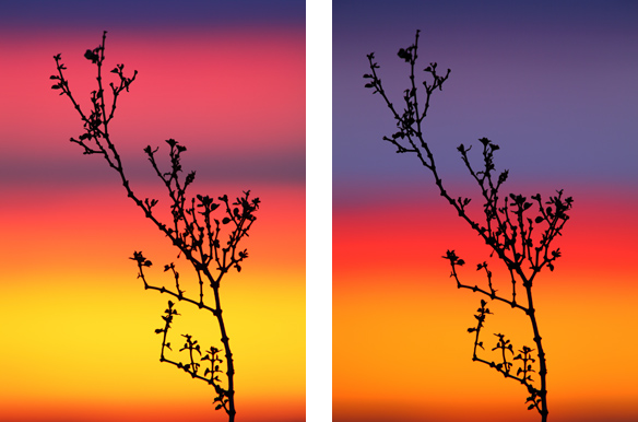 Creosote Bush at Sunset / Photos by Steve Berardi