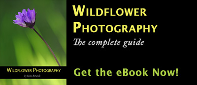 Wildflower Photography eBook