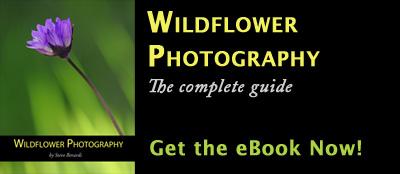 Wildflower Photography eBook