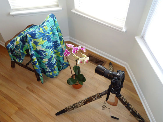 flower photo setup
