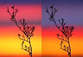 Creosote Bush / Photos by Steve Berardi