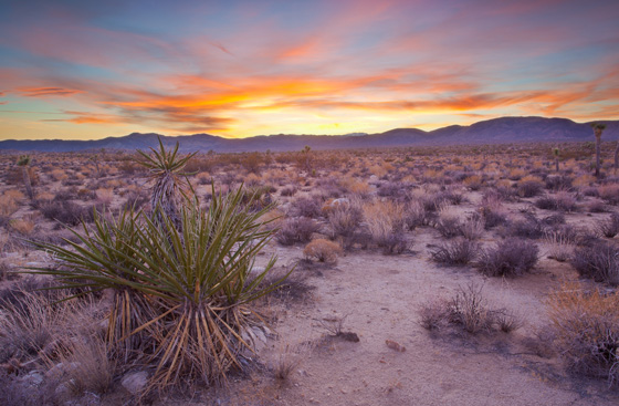 Mojave Desert / Photo by Steve Berardi
