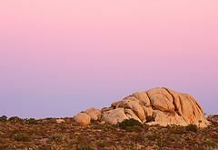 Mojave Desert at Sunset / Photo by Steve Berardi