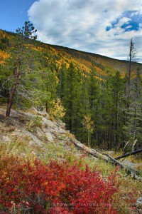 Rocky Mountain NP Fall Colors
